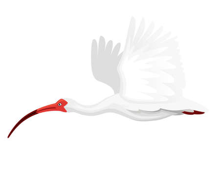 American white ibis flying flapping his wings flat  cartoon animal design white bird with red beak on white Illustration