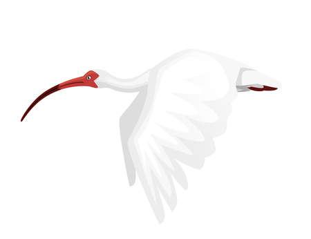 American white ibis flat cartoon animal design white bird with red beak on white