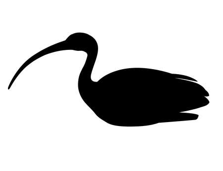 Black silhouette American white ibis flat Illustration