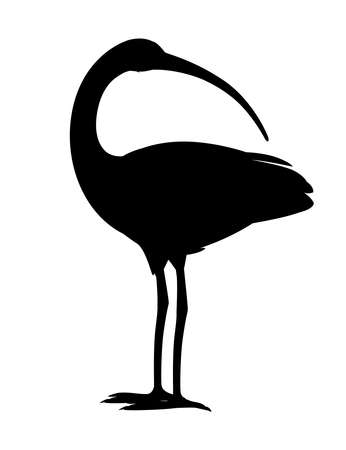 American white ibis head looks back