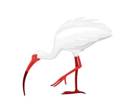 American white ibis stand on one leg flat