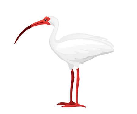 American white ibis flat