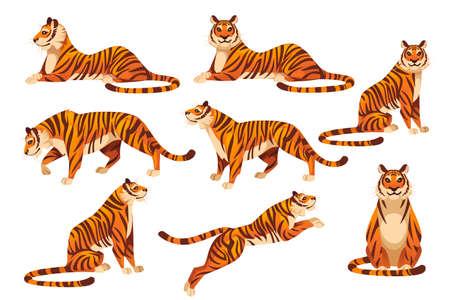 Conjunto de ilustración de vector plano de diseño animal de dibujos animados de tema de fauna y fauna de tigre rojo grande adulto aislado sobre fondo blanco.