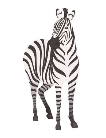 African zebra front view cartoon animal design flat vector illustration isolated on white background.