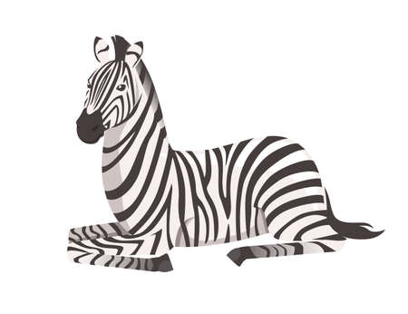 African zebra lying on ground side view cartoon animal design flat vector illustration isolated on white background.