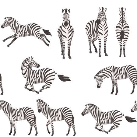 Seamless pattern of african zebra side and front view cartoon animal design flat vector illustration on white background.