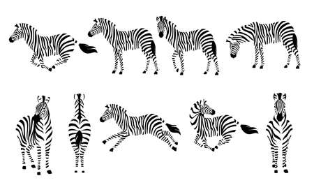 Set of african zebra side and front view outline striped silhouette animal design flat vector illustration isolated on white background.
