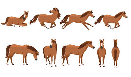 Set of brown horse wild or domestic animal cartoon design flat vector illustration isolated on white background.
