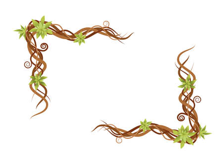 Vine plant abstract green wild branches frame