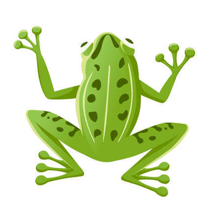 Cute smiling green frog sitting on ground cartoon animal design flat vector illustration isolated on white background. Ilustrace