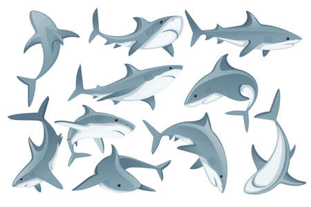 Set of shark with mouth closed in different poses Shark with mouth closed giant apex predator cartoon animal design