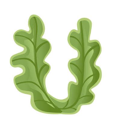 Vegetable letter U lettuce style cartoon vegetable design