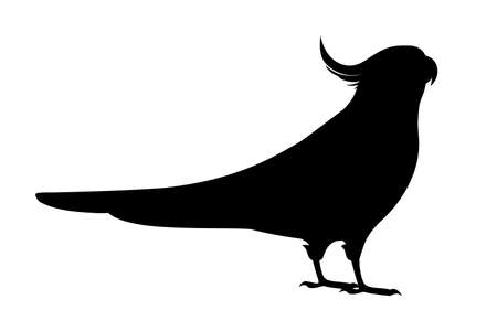 Black silhouette adult parrot of normal grey cockatiel (Nymphicus hollandicus, corella) cartoon bird design flat vector illustration isolated on white background.