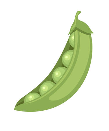 Green peas in pod fresh food flat vector illustration isolated on white background.