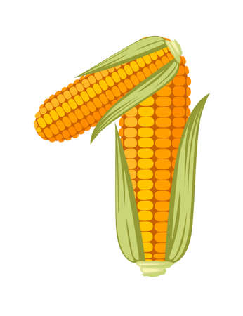Yellow corn number 1 style food cartoon design flat vector illustration isolated on white background.
