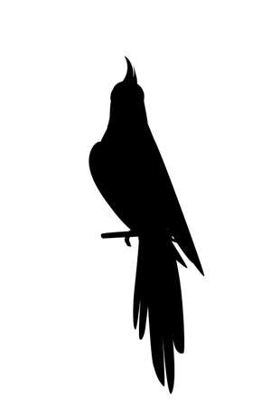 Black silhouette cute adult parrot of normal grey cockatiel sitting on branch and looking on you (Nymphicus hollandicus, corella) cartoon bird design flat vector illustration isolated. Illustration