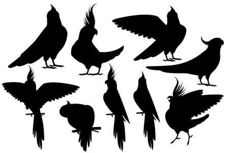 Black silhouette set of adult parrot of normal grey cockatiel (Nymphicus hollandicus, corella) cartoon bird design flat vector illustration isolated on white background. Ilustração