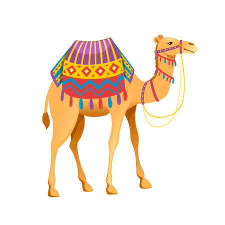 Cute two hump camel with bridle and saddle cartoon animal design flat vector illustration isolated on white background.