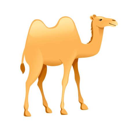 Illustration de vecteur plat mignon deux bosse chameau dessin animé animal design isolé sur fond blanc. Vecteurs