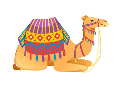 Cute two hump camel with bridle and saddle sitting on ground cartoon animal design flat vector illustration isolated on white background.