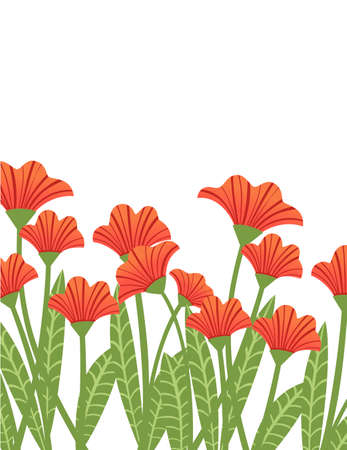 Red poppies in a row plant of red flowers flat vector illustration on white background.