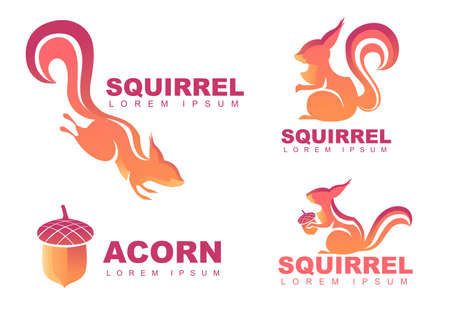 Set of  design squirrel with acorn flat vector illustration isolated on white background.