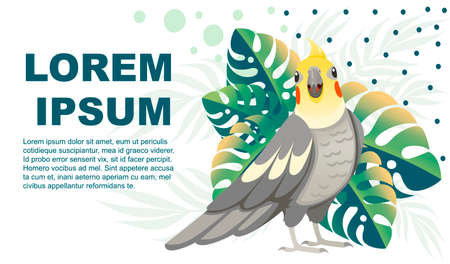 Adult parrot of normal grey cockatiel (Nymphicus hollandicus, corella) and tropical green leaves cartoon bird design flat vector illustration on white background horizontal flyer design. Illustration