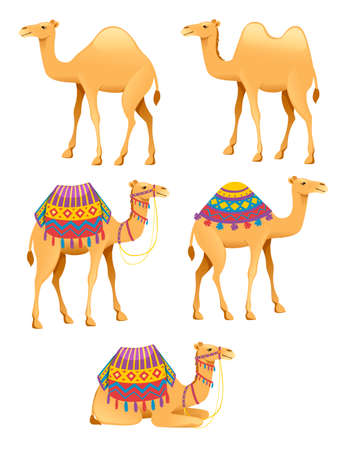 Set of cute two hump and one hump camels with decorative saddle cartoon animal design flat vector illustration isolated on white background. Illusztráció