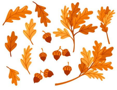 Various oak autumn leaves with acorn flat vector illustration isolated on white background.