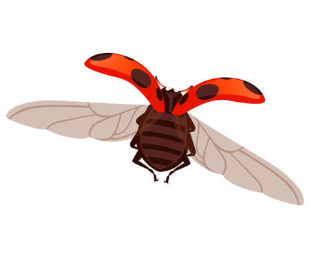 Ladybug with open shell and wings flying beetle cartoon bug design flat vector illustration isolated on white background. Ilustracja