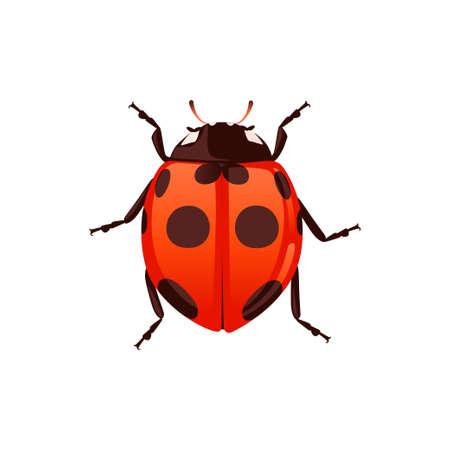 Coccinelle avec coquille fermée scarabée dessin animé bug design plat vector illustration isolé sur fond blanc.