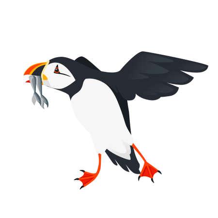 Flying atlantic puffin bird with fish in beak cartoon animal design flat vector illustration isolated on white background.