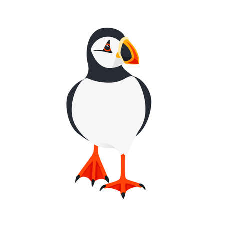 Atlantic puffin bird walking cartoon animal design flat vector illustration isolated on white background.