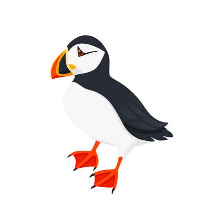 Atlantic puffin bird cartoon animal design flat vector illustration isolated on white background.