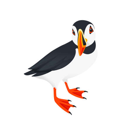 Atlantic puffin bird cartoon animal design flat vector illustration isolated on white background. Ilustração