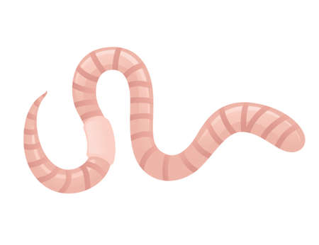 Earthworm crawling cartoon worm design flat vector illustration isolated on white background.