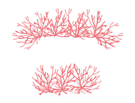 Pink colored seaweeds underwater ocean plants sea coral elements flat vector illustration on white background.