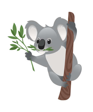 Cute grey koala bear sit on wood branch and eating green leaves cartoon animal design flat vector illustration isolated on white background.