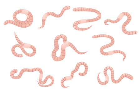 Set of earthworm crawling cartoon worm design flat vector illustration isolated on white background. Иллюстрация