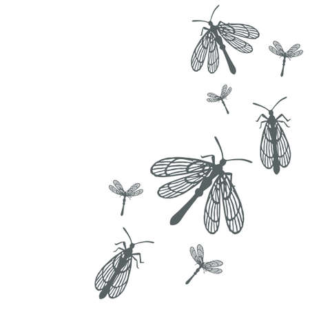 Pattern with simple flat beetle with different wings insects flat vector illustration on white background.