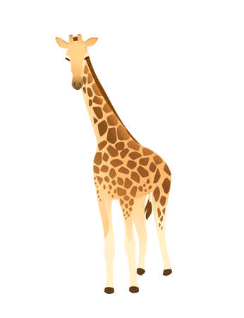 Mature giraffe african animal with long neck cartoon animal design flat vector illustration isolated on white background.