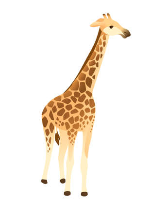 Mature giraffe african animal with long neck cartoon animal design flat vector illustration isolated on white background. Illustration