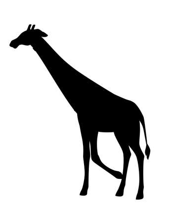 Black silhouette mature giraffe african animal with long neck cartoon animal design flat vector illustration isolated on white background.