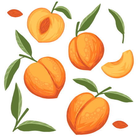 Set of peach fruit whole and sliced with green leaves flat vector illustration isolated on white background.