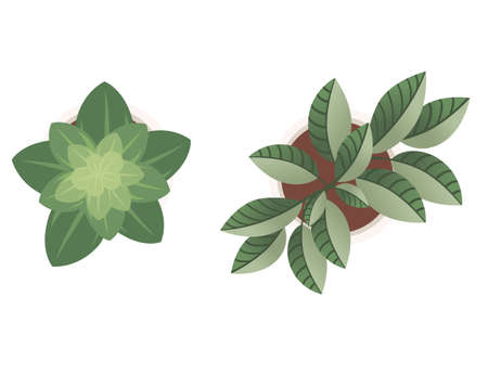 Two house pot plants with green leaves top view flat vector illustration isolated on white background.