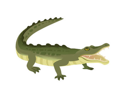 Green crocodile character big carnivore reptile cartoon animal design flat vector illustration isolated on white background.