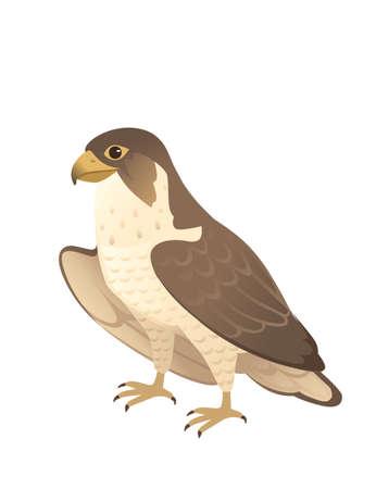 Predatory bird cute adult falcon cartoon animal design birds of prey character flat vector illustration isolated on white background