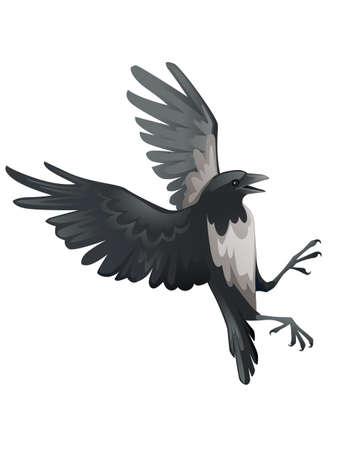 Predatory bird adult black and gray crow cartoon animal design birds of prey character flat vector illustration isolated on white background Ilustracje wektorowe
