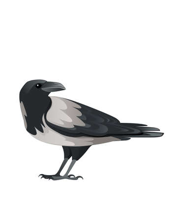 Predatory bird adult black and gray crow cartoon animal design birds of prey character flat vector illustration isolated on white background
