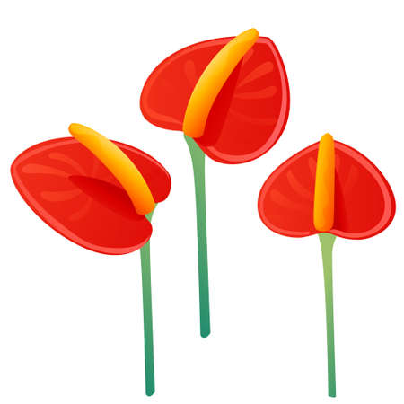 Set of three decorative flowers red anthurium floral element for garden or flower pot flat vector illustration isolated on white background.